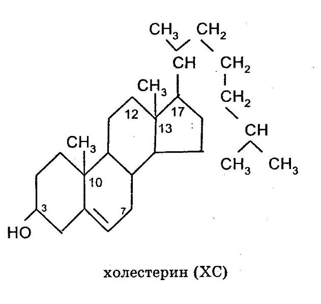 статины гормоны
