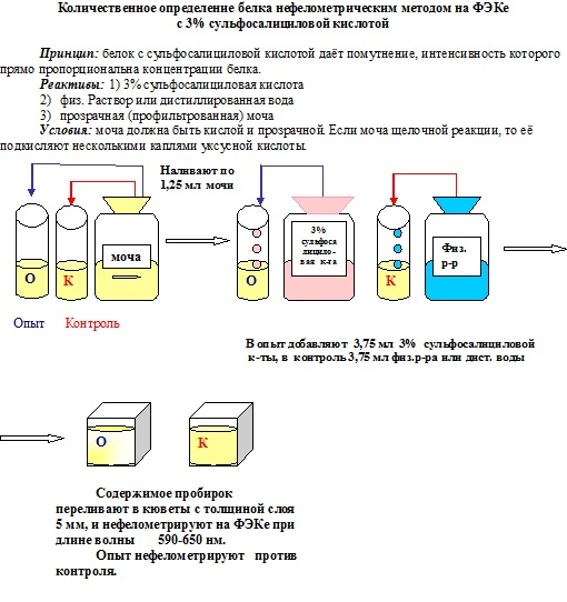 Как определить есть ли в моче белок в домашних условиях