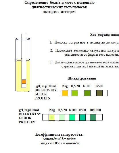 Суточный белок в моче беременной 1107